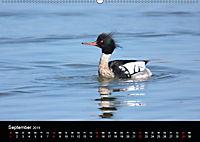 Einblicke in die Welt der Säger (Wandkalender 2019 DIN A2 quer) - Produktdetailbild 9
