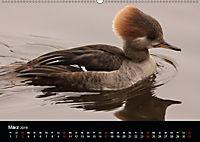 Einblicke in die Welt der Säger (Wandkalender 2019 DIN A2 quer) - Produktdetailbild 3