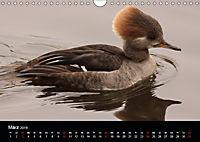 Einblicke in die Welt der Säger (Wandkalender 2019 DIN A4 quer) - Produktdetailbild 3