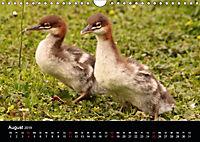 Einblicke in die Welt der Säger (Wandkalender 2019 DIN A4 quer) - Produktdetailbild 8