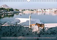 Eine Reise durch Rajasthan (Wandkalender 2019 DIN A4 quer) - Produktdetailbild 2