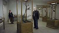 Eine Taube sitzt auf einem Zweig und denkt über das Leben nach - Produktdetailbild 1