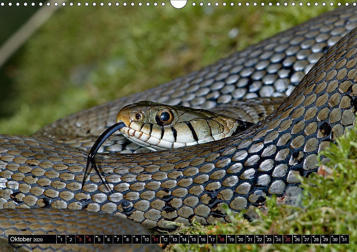 Einheimische schlangen