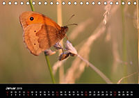 Einheimische Tagfalter (Tischkalender 2019 DIN A5 quer) - Produktdetailbild 1