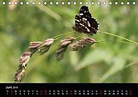 Einheimische Tagfalter (Tischkalender 2019 DIN A5 quer) - Produktdetailbild 6