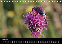 Einheimische Tagfalter (Tischkalender 2019 DIN A5 quer) - Produktdetailbild 5