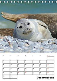 Einzigartige Insel Helgoland (Tischkalender 2019 DIN A5 hoch) - Produktdetailbild 12