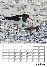 Einzigartige Insel Helgoland (Tischkalender 2019 DIN A5 hoch) - Produktdetailbild 6