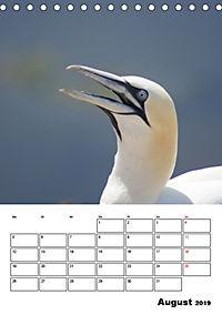Einzigartige Insel Helgoland (Tischkalender 2019 DIN A5 hoch) - Produktdetailbild 8