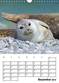 Einzigartige Insel Helgoland (Wandkalender 2019 DIN A4 hoch) - Produktdetailbild 4