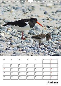 Einzigartige Insel Helgoland (Wandkalender 2019 DIN A4 hoch) - Produktdetailbild 6