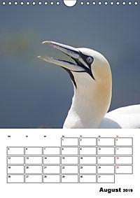 Einzigartige Insel Helgoland (Wandkalender 2019 DIN A4 hoch) - Produktdetailbild 8