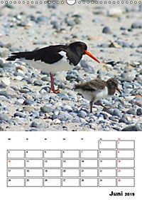 Einzigartige Insel Helgoland (Wandkalender 2019 DIN A3 hoch) - Produktdetailbild 6