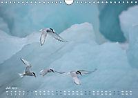 EISLand - Eine Islandreise durch Schnee und Eis (Wandkalender 2019 DIN A4 quer) - Produktdetailbild 7