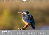 Eisvögel - emotionale Momente mit den fliegenden Edelsteinen (Wandkalender 2019 DIN A4 quer) - Produktdetailbild 11