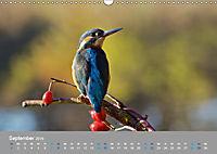Eisvögel - emotionale Momente mit den fliegenden Edelsteinen (Wandkalender 2019 DIN A3 quer) - Produktdetailbild 9