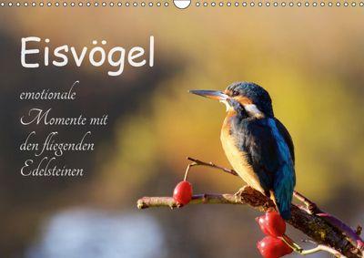 Eisvögel - emotionale Momente mit den fliegenden Edelsteinen (Wandkalender 2019 DIN A3 quer), Jens Kalanke