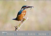 Eisvögel - emotionale Momente mit den fliegenden Edelsteinen (Wandkalender 2019 DIN A3 quer) - Produktdetailbild 3