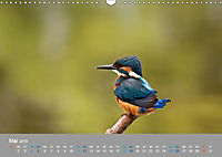 Eisvögel - emotionale Momente mit den fliegenden Edelsteinen (Wandkalender 2019 DIN A3 quer) - Produktdetailbild 5