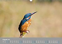 Eisvögel - emotionale Momente mit den fliegenden Edelsteinen (Wandkalender 2019 DIN A3 quer) - Produktdetailbild 8