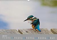 Eisvögel - emotionale Momente mit den fliegenden Edelsteinen (Wandkalender 2019 DIN A3 quer) - Produktdetailbild 7