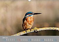 Eisvögel - emotionale Momente mit den fliegenden Edelsteinen (Wandkalender 2019 DIN A3 quer) - Produktdetailbild 6
