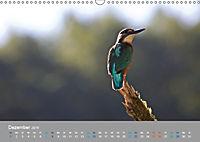 Eisvögel - emotionale Momente mit den fliegenden Edelsteinen (Wandkalender 2019 DIN A3 quer) - Produktdetailbild 12