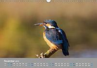 Eisvögel - emotionale Momente mit den fliegenden Edelsteinen (Wandkalender 2019 DIN A3 quer) - Produktdetailbild 11