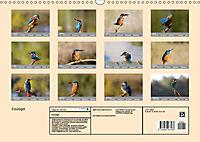 Eisvögel - emotionale Momente mit den fliegenden Edelsteinen (Wandkalender 2019 DIN A3 quer) - Produktdetailbild 13