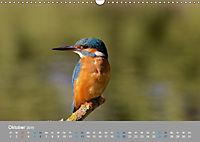 Eisvögel - emotionale Momente mit den fliegenden Edelsteinen (Wandkalender 2019 DIN A3 quer) - Produktdetailbild 10