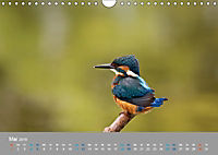 Eisvögel - emotionale Momente mit den fliegenden Edelsteinen (Wandkalender 2019 DIN A4 quer) - Produktdetailbild 5