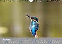 Eisvögel - emotionale Momente mit den fliegenden Edelsteinen (Wandkalender 2019 DIN A4 quer) - Produktdetailbild 2