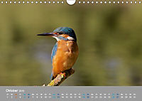 Eisvögel - emotionale Momente mit den fliegenden Edelsteinen (Wandkalender 2019 DIN A4 quer) - Produktdetailbild 10