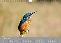 Eisvögel - emotionale Momente mit den fliegenden Edelsteinen (Wandkalender 2019 DIN A4 quer) - Produktdetailbild 8