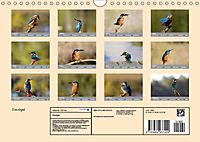 Eisvögel - emotionale Momente mit den fliegenden Edelsteinen (Wandkalender 2019 DIN A4 quer) - Produktdetailbild 13