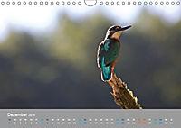 Eisvögel - emotionale Momente mit den fliegenden Edelsteinen (Wandkalender 2019 DIN A4 quer) - Produktdetailbild 12