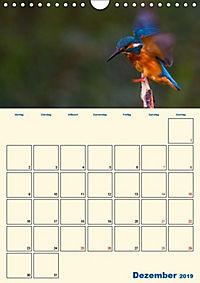 Eisvogel - einfach liebenswert, das flinke Kerlchen (Wandkalender 2019 DIN A4 hoch) - Produktdetailbild 10