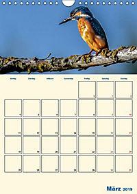 Eisvogel - einfach liebenswert, das flinke Kerlchen (Wandkalender 2019 DIN A4 hoch) - Produktdetailbild 11