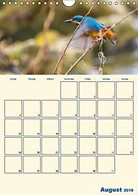 Eisvogel - einfach liebenswert, das flinke Kerlchen (Wandkalender 2019 DIN A4 hoch) - Produktdetailbild 13