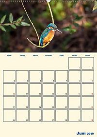 Eisvogel - einfach liebenswert, das flinke Kerlchen (Wandkalender 2019 DIN A2 hoch) - Produktdetailbild 5