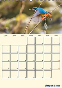 Eisvogel - einfach liebenswert, das flinke Kerlchen (Wandkalender 2019 DIN A2 hoch) - Produktdetailbild 8