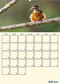 Eisvogel - einfach liebenswert, das flinke Kerlchen (Wandkalender 2019 DIN A2 hoch) - Produktdetailbild 10