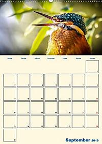 Eisvogel - einfach liebenswert, das flinke Kerlchen (Wandkalender 2019 DIN A2 hoch) - Produktdetailbild 11
