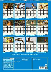 Eisvogel - einfach liebenswert, das flinke Kerlchen (Wandkalender 2019 DIN A2 hoch) - Produktdetailbild 12