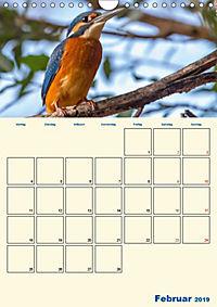 Eisvogel - einfach liebenswert, das flinke Kerlchen (Wandkalender 2019 DIN A4 hoch) - Produktdetailbild 2
