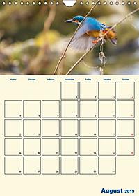 Eisvogel - einfach liebenswert, das flinke Kerlchen (Wandkalender 2019 DIN A4 hoch) - Produktdetailbild 8