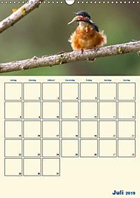 Eisvogel - einfach liebenswert, das flinke Kerlchen (Wandkalender 2019 DIN A3 hoch) - Produktdetailbild 7