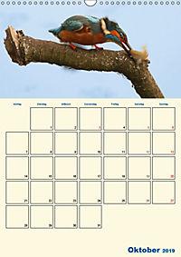 Eisvogel - einfach liebenswert, das flinke Kerlchen (Wandkalender 2019 DIN A3 hoch) - Produktdetailbild 10