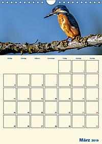 Eisvogel - einfach liebenswert, das flinke Kerlchen (Wandkalender 2019 DIN A4 hoch) - Produktdetailbild 3