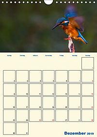 Eisvogel - einfach liebenswert, das flinke Kerlchen (Wandkalender 2019 DIN A4 hoch) - Produktdetailbild 12